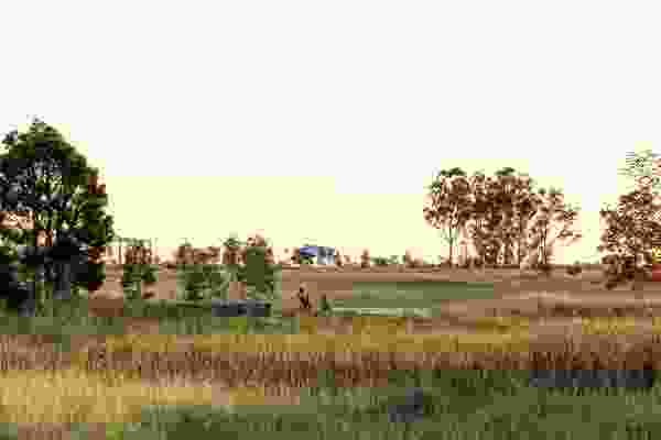 The design of Bungarribee Park celebrates abstracted notions of bush and overtly constructed ecologies.