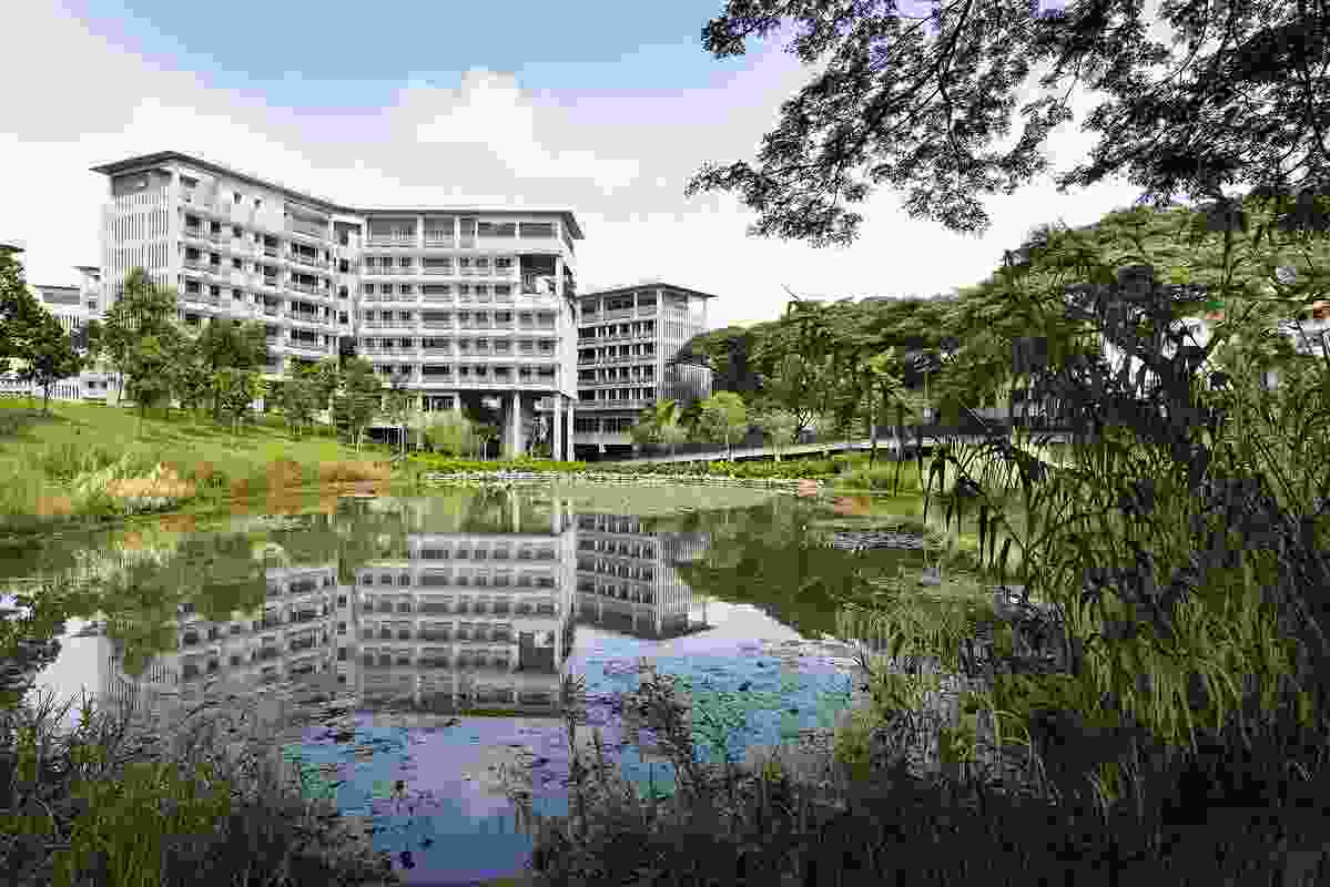 The residents of NTU's Pioneer and Crescent Halls can immerse themselves in the wetland habitat via a network of elevated boardwalks, seating decks and an experiential trail (STX Landscape Architects, Helen Smith-Yeo).
